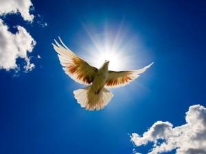 голубь на благовещение